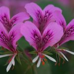 Flower Power: How Flowers Influence Relationship Choices