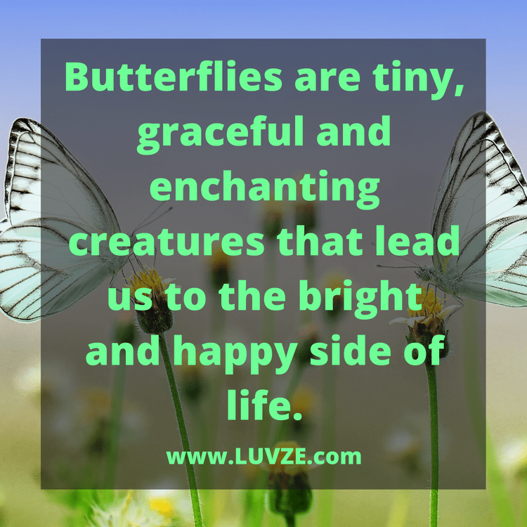 130 Butterfly Quotes and Sayings
