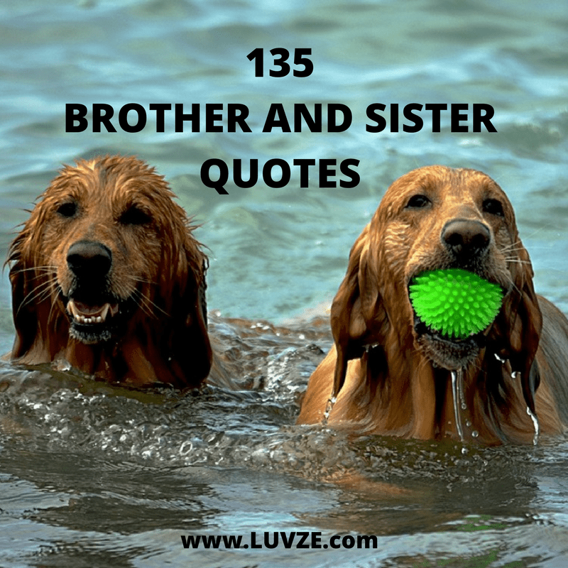 135 Cute Brother Sister Quotes, Sayings and Messages
